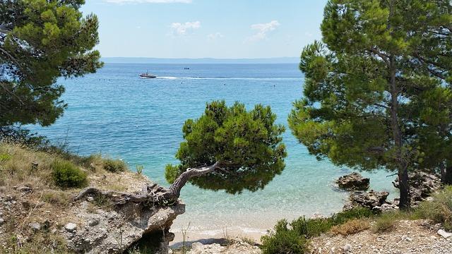 pobřeží se stromy